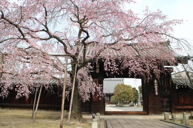 妙覚寺の基本情報
