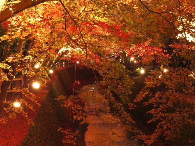 紅葉とライトアップ